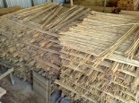Big stock on spanish reed