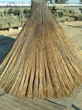 Cape Thatch Reed - per bundle